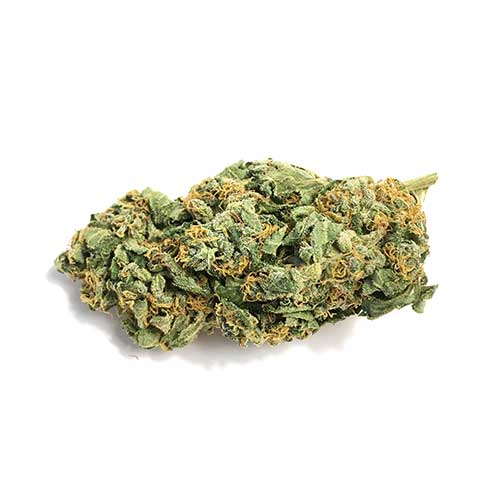 Buy Jack Herer Marijuana Strain Online, buy Jack Herer, buy Jack Herer marijuana, buy Jack Herer weed In Australia, buy Jack Herer weed In Austria, buy Jack Herer weed In France, buy Jack Herer weed In Hungary, buy Jack Herer weed In Italy, buy Jack Herer weed In Japan, buy Jack Herer weed In UK, buy Jack Herer weed online, buy Jack Herer weed USA, buy marijuana weed online, Jack Herer, JACK HERER EXPERIENCE, JACK HERER SEEDS, how to buy marijuana online, how to buy weed online, how to get free weed online, how to get weed online, how to grow weed, how to load a glass blunt, how to order edibles online, how to order marijuana online, how to order weed online, how to refill a vape pen, how to refill vape pen, how to ship edibles, how to ship marijuana, how to ship weed, indica flower, Indica Weed Strains, IS IT LEGAL TO BUY EDIBLES ONLINE, is weed legal in canada, john deere 420 for sale craigslist, KHALIFA KUSH, king kush, king kush strain, KUSH FOR SALE, larry og kush, larry og strain, LEGAL BUDS, legal weed, Legit Afghan Kush Online, lemon larry og, louis 13 weed, mail order, mail order cannabis, mail order dabs, mail order edibles, MAIL ORDER MARIJUANA, mail order pot, mail order weed, mail order weed online, mail order weed usa, mail terra, mailing small amounts of weed, marijuana by state, marijuana chocolate, MARIJUANA CLONES FOR SALE, marijuana concentrate, marijuana dictionary, marijuana distillate, marijuana edibles for sale, marijuana edibles online, MARIJUANA FOR SALE, MARIJUANA FOR SALE ONLINE, marijuana online, marijuana online store, marijuana seed bank, Marijuana Strains Tags, medical cannabis doctors, medical cannabis online, medical cannabis states, medical marijuana dispensary, medical marijuana online, medical marijuana online store, medical marijuana states, MMJ, mmj express, mmj online system, moonrock cannabis, moroccan hash, most potent afghani strains, mowie wowie weed, nova weed, nuken strain, nyc diesel, OG KUSH, og vape pen, online dispensary canada, ONLINE DISPENSARY EDIBLES, ONLINE DISPENSARY SHIPPING, online dispensary shipping usa, online ordering, online weed dispensary, online weed store, Order Afghan Kush, order cannabis, order cannabis online, order dabs online, order edibles, order edibles online, order edibles online review, order marijuana, order marijuana edibles online, order marijuana online, order real weed online, order thc edibles online, order weed, order weed edibles online, ORDER WEED ONLINE, phoenix tears for sale, phoenix tears oil for sale, phoenix tears reviews, phoenix tears thc, pineapple afghani effects, pink marijuana, pink starburst strain, pink starburst weed, purchase marijuana online, purchase weed online, purple shatter, red congolese, rx cannabis online sale, selling weed online, shipping edibles, shipping wax in the mail, snoop dogg moon rocks, snoops dream, snoops dream strain, starburst strain, stoner slang, sun rocks vs moon rocks, tara weeds, terra blueberries, terra cannabis, terra com mail, terra life, terra mail usa, thc candy, thc concentrate for sale, thc crystalline for sale, thc edibles for sale, thc edibles online, thc gum, thc gummies for sale, thc peanut butter, thc shipping, toronto dispensary no card, tuna kush, vancouver dispensary no card, vancouver weed shops, vape pen cartridge refill, vape refills, weed brownies for sale, weed candy, weed candy for sale, weed dispensary toronto, weed distillate, weed edibles, weed edibles delivery, weed edibles for sale, weed edibles for sale online, weed edibles online, weed flower, weed for sale, weed for sale online, WEED FOR SALE ONLINE 420 MAIL ORDER, weed for sale online cheap, weed gummies for sale, weed online, weed online cheap, weed pen, weed seeds, weed shop online, weed websites to buy from, what are phoenix tears, what are sun rocks, what is budder, where can i buy afghan kush, where can i buy edibles, where can i buy marijuana, where can i buy marijuana online, where can i buy weed online, where can i get weed online, where did the term 420 come from, where to buy cannabis, where to buy dabs online, where to buy edibles, where to buy edibles online, where to buy marijuana online, where to buy shatter wax online, where to buy weed online, where to get edibles, where to get weed online, where to order weed online, white castle strain, your cannabis orders